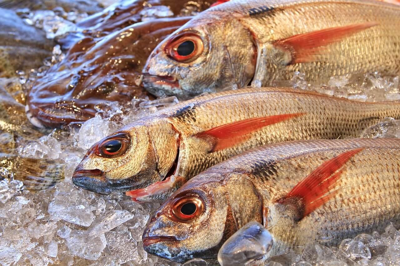 grossiste poisson nantes